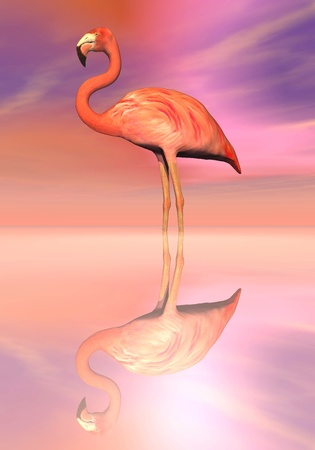 One flamingos standing peacefully in the water by colorful sunset photo