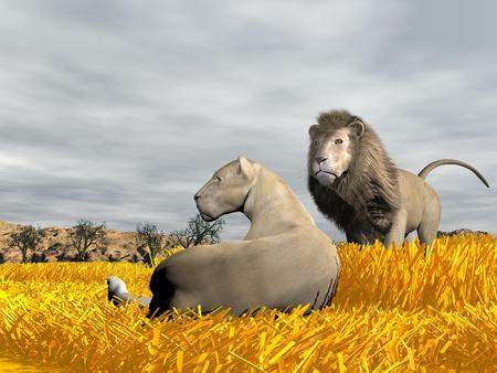 Lioness lying peacefully on the grass next to lion by cloudy weather in savannah photo