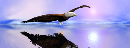 Beautiful american bald eagle flying upon ocean by sunset, 360 degrees effect Stock Photo