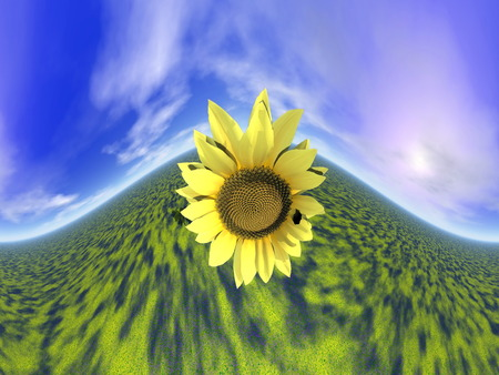 Close up on one sunflower standing out of the green grass next to sun by beautiful day, 360 degrees effect photo