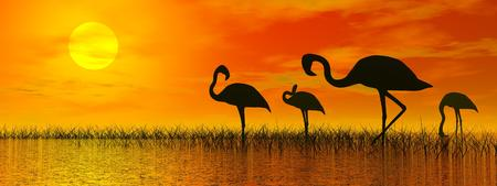 Flock of flamingo shadows standing in the water with grass by red sunset photo