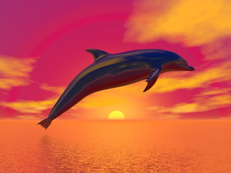 Dolphin jumping upon the ocean by beautiful red sunset photo