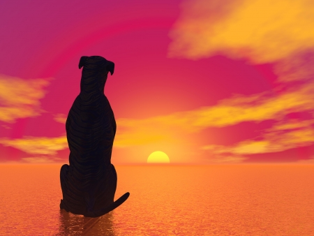 Black silhouette of a dog sitting and looking at the beautiful red sunset Фото со стока