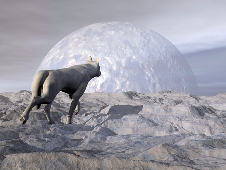 White wolf walking in the snowy mountain by full moon light Stock Photo