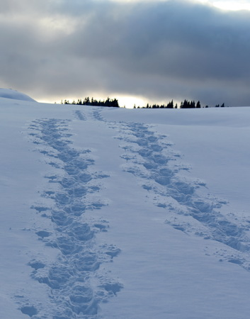 Two lines of footsteps in the snowy mountain by cloudy winter weather photo