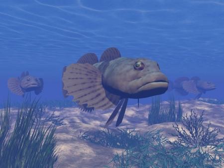 betta: Three brown fishes in deep blue underwater