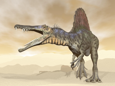 Spinosaurus dinosaur walking and roaring in the desert