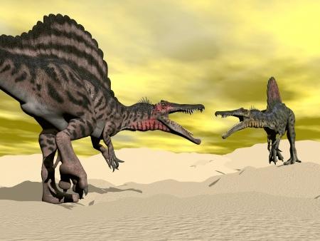 spinosaurus: Two spinosaurus dinosaur fighting in the desert