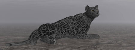 panthera pardus: One black jaguar resting quietly on the ground by dark night