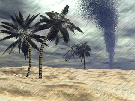 Palm trees under the rain at beach