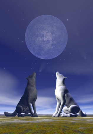 One white wolf and another black howling at full moon by deep blue night