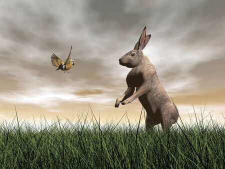 brown hare: One hare talking to a bird on the grass by brown sunset Stock Photo