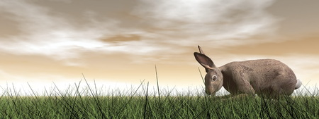 brown hare: One quiet hare standing in the grass by brown sunset