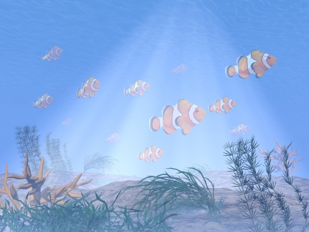 big clown fish: Clownfishes or anemonefishes in deep blue underwater Stock Photo