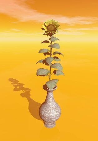 One single sunflower in a vase by sunset photo
