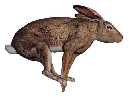 brown hare: One brown hare running in white background
