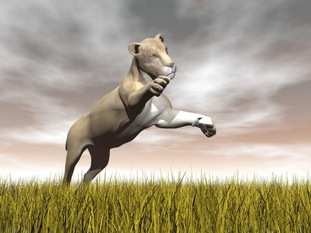 focusing: One lioness jumping while focusing on something upon yellow grass by cloudy brown day