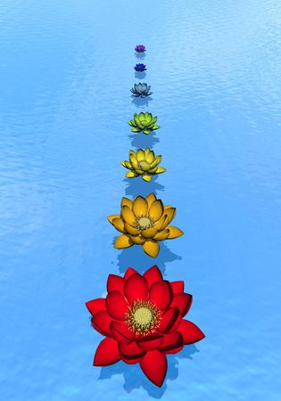 Lily flowers with chakra colors upon blue water photo