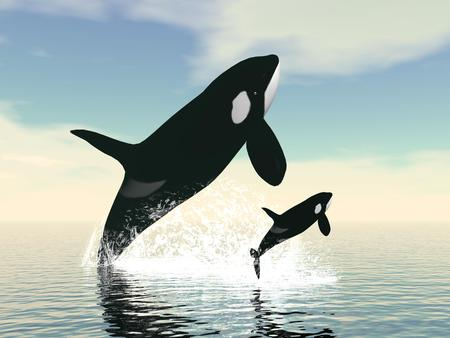 Killer whale mum and baby jumping upon ocean water by day Stock Photo
