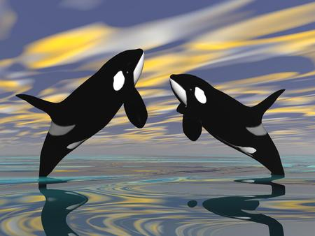 Killer whales jumping upon ocean water by sunset photo