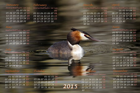 European 2015 year calendar with crested grebe duck