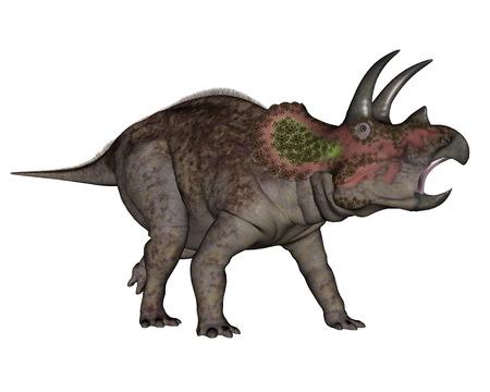 triceratops: Triceratops dinosaur walking in white background- 3D render