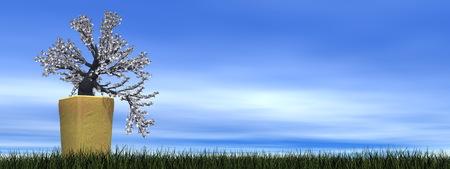 apricot tree: Apricot tree bonsai - 3D render Stock Photo