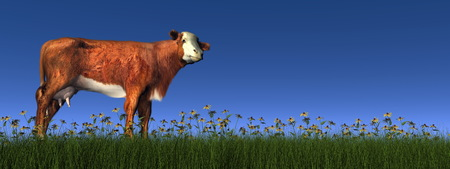 buttercups: Hereford cow - 3D render