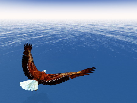 flying eagle: Eagle freedom - 3D render Stock Photo