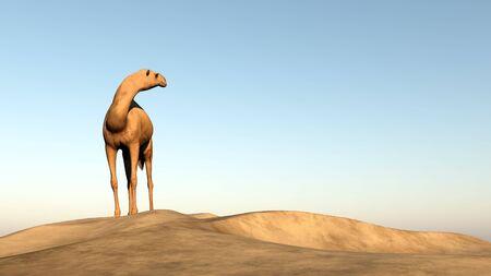 looking: Camel looking behind - 3D render