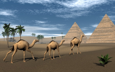 Camels and pyramids - 3D render photo