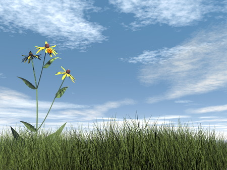 ladybird: Ladybird - 3D render