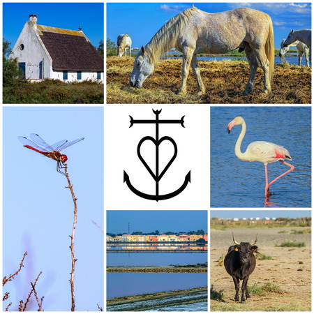 gardian: Collage of Camargue photos, France