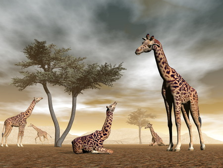 Giraffes in the savannah - 3D render photo