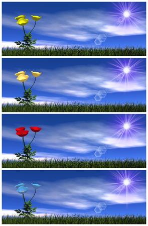 poppy flowers: Set of colorful poppy flowers - 3D render