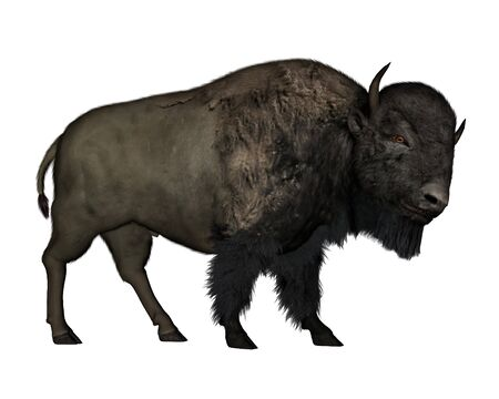 bison: Bison walking - 3D  render
