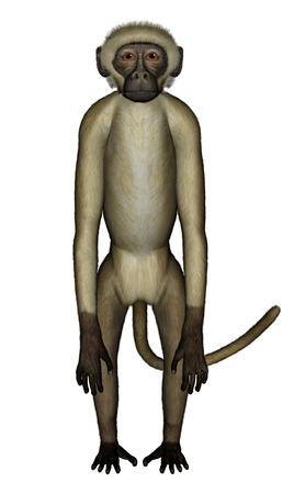 perplexed: Monkey perplexed - 3D render