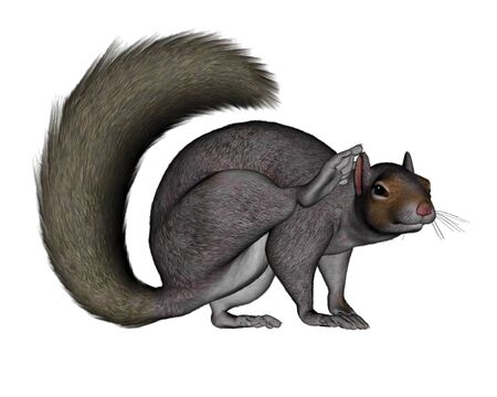 and scratching: Squirrel scratching - 3D render Stock Photo