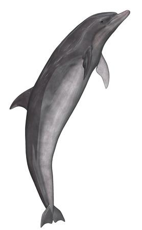 delfin: Dolphin - 3D render