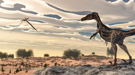 pteranodon: Velociraptor dinosaur observing pteranodon flying in the desert with nipa and tamaris plants by sunset light - 3D render