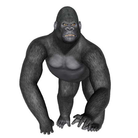 silverback: Angry gorilla walking isolated in white background - 3D render