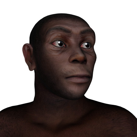 anthropology: Male homo erectus portrait isolated in white background - 3D render