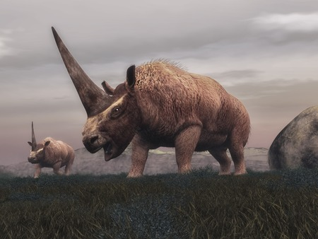 Elasmotherium mammal dinosaurs walking in the steppe grass by cloudy day - 3D render