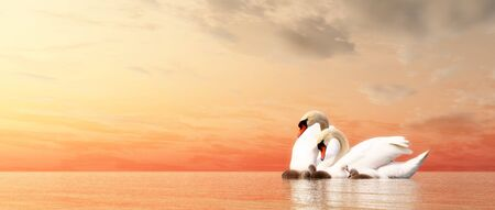 cygnus: Swan family floating over water by sunset - 3D render