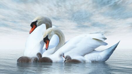 Swan family floating over by blue day - 3D render Stock Photo