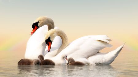 swan: Swan family floating over water by sunset - 3D render