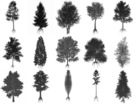 Set or collection of common trees isolated in white background, black silhouettes - 3D render Standard-Bild
