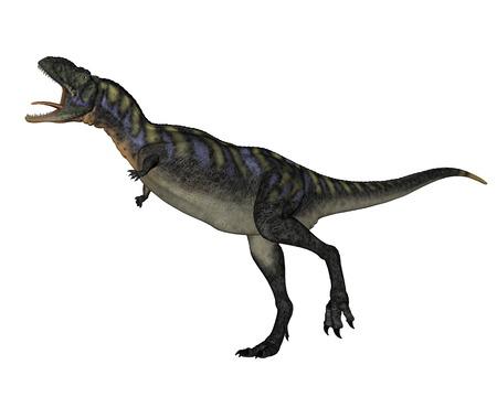 dangerous: Aucasaurus dinosaur walking roaring isolated in white background - 3D render Stock Photo