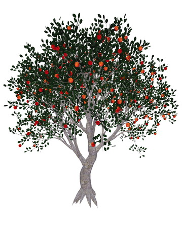 Apple tree, malus domestica, isolated in white background - 3D render