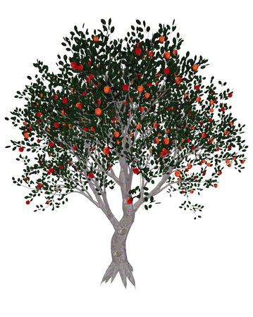 albero di mele: Melo, Malus domestica, isolati in sfondo bianco - rendering 3D
